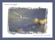 Graduation Digital Art Framed Prints - Dreams Take Flight Poster or Card Framed Print by Carol Groenen