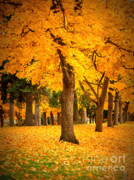 Yellow Leaves Digital Art Prints - Dreamy Autumn Day Print by Carol Groenen