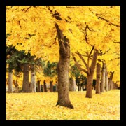 Yellow Leaves Posters - Dreamy Autumn Gold Poster by Carol Groenen