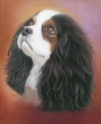 Spaniels Drawings Framed Prints - Dreamy Framed Print by Karen Hull