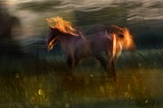 Equines Metal Prints - Dreamy Land Metal Print by Dorota Kudyba