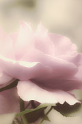 Rose Closeup Posters - Dreamy Pink Poster by Julie Palencia