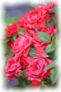 Woman Greeting Cards Framed Prints - Dreamy Red Roses - Digital Art Framed Print by Carol Groenen