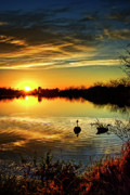 Canadian Geese Art - Dreamy Sunset by Saija  Lehtonen