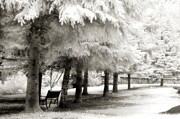 Surreal Infrared Dreamy Landscape Prints - Dreamy Surreal Infrared Park Bench Landscape Print by Kathy Fornal