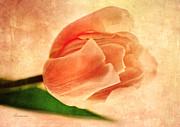 Dreamy Vintage Tulip Print by Zeana Romanovna