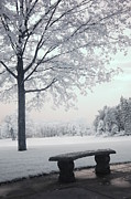 Park Scene Posters - Dreamy White Blue Infrared Michigan Landscape Poster by Kathy Fornal