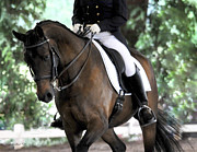 Dressage Photos - Dressage Beauty by Terry Kirkland Cook