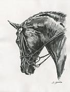Detailed Drawings - Dressage horse by Jana Goode