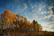 Kanada Photos - Dressed In Autumn Colors by Priska Wettstein