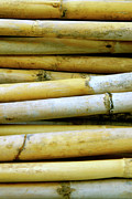 Weathered Photo Posters - Dried Canes Poster by Carlos Caetano