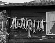 Fish House Framed Prints - Dried Cod on a Line Framed Print by Heiko Koehrer-Wagner