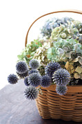 Basket Photos - Dried Flowers by Fumie Kobayashi
