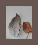 Taupe Frame Framed Prints - Dried Leaves In A Frame Framed Print by Marsha Heiken