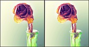 Stereoscopy Photos - Dried Rose - Gently cross your eyes and focus on the middle image by Brian Wallace