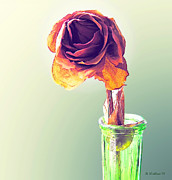 Dried Rose Print by Brian Wallace
