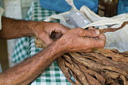 69 Photos - Dried tobacco leaves in mans hands by Sami Sarkis