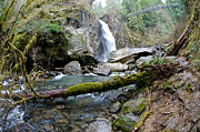 Lincoln City Prints - Drift Creek Falls Print by Margaret Pitcher