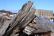 New England Ocean Mixed Media Prints - Drift wood at Fort popham Print by Lewis Journeyman