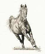 Horse Drawings Framed Prints - Drifter 1 Framed Print by Lorrie Kalena
