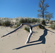Indiana Dunes Photos - Driftwood 1 by Cedric Hampton