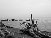 Beach Scenes Photo Originals - Driftwood 1 by Tanya  Searcy