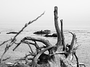 Beach Scenes Photo Originals - Driftwood 3 by Tanya  Searcy