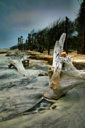Framed Beach Print Photos - Driftwood and Beach by Steven Ainsworth