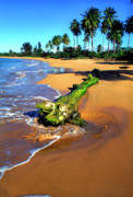 Puerto Rico Photo Prints - Driftwood and Palm Trees Print by Thomas R Fletcher
