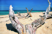 Caribbean Sea Framed Prints - Driftwood Buck Island National Park Framed Print by Thomas R Fletcher
