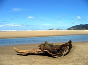Cannon Beach Framed Prints - Driftwood Garden Framed Print by Will Borden