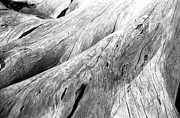Driftwood Photos - Driftwood, Jekyll Island, Georgia by Jason Quick