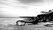 Beach. Black And White Posters - Driftwood Poster by Jenni Robison