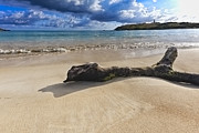 Puerto Rico Prints - Driftwood on a Caribbean Beach Print by George Oze