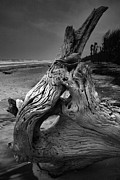 Beach Photograph Prints - Driftwood on Beach Print by Steven Ainsworth