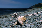 Driftwood On Rocky Beach Print by Sally Weigand