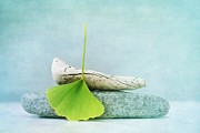 Baby Blue Framed Prints - Driftwood Stones And A Gingko Leaf Framed Print by Priska Wettstein