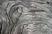 Swirling Framed Prints - Driftwood Swirls 5 Framed Print by David Kleinsasser