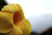 Droplets Print by Frederico Borges