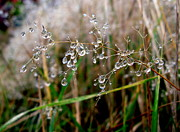 Droplets Originals - Droplets on Grass by John Chatterley