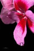 Christopher Holmes - Droplets On Pink