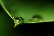 Bob Daalder Art - Drops on a leaf by Bob Daalder