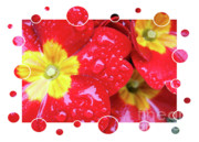 Primroses Digital Art - Drops Upon Raindrops 4 by Carol Groenen