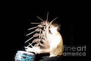 Stroboscopic Photos - Drummer by Ted Kinsman