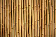 Brandon Tabiolo Photos - Dry Bamboo Rows by Brandon Tabiolo - Printscapes