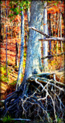 Tree Roots Metal Prints - Dry Docked Metal Print by Susie Weaver