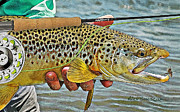 Rainbow Trout Drawings Prints - Dry Fly Brown Print by Alex Suescun