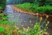 Dry Creek Photos - Dry Fork River by Thomas R Fletcher