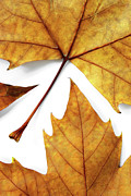Element Photos - Dry Leafs by Carlos Caetano