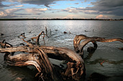 Dry Lake Prints - Dry Log In A Lake Print by Stylianos Kleanthous